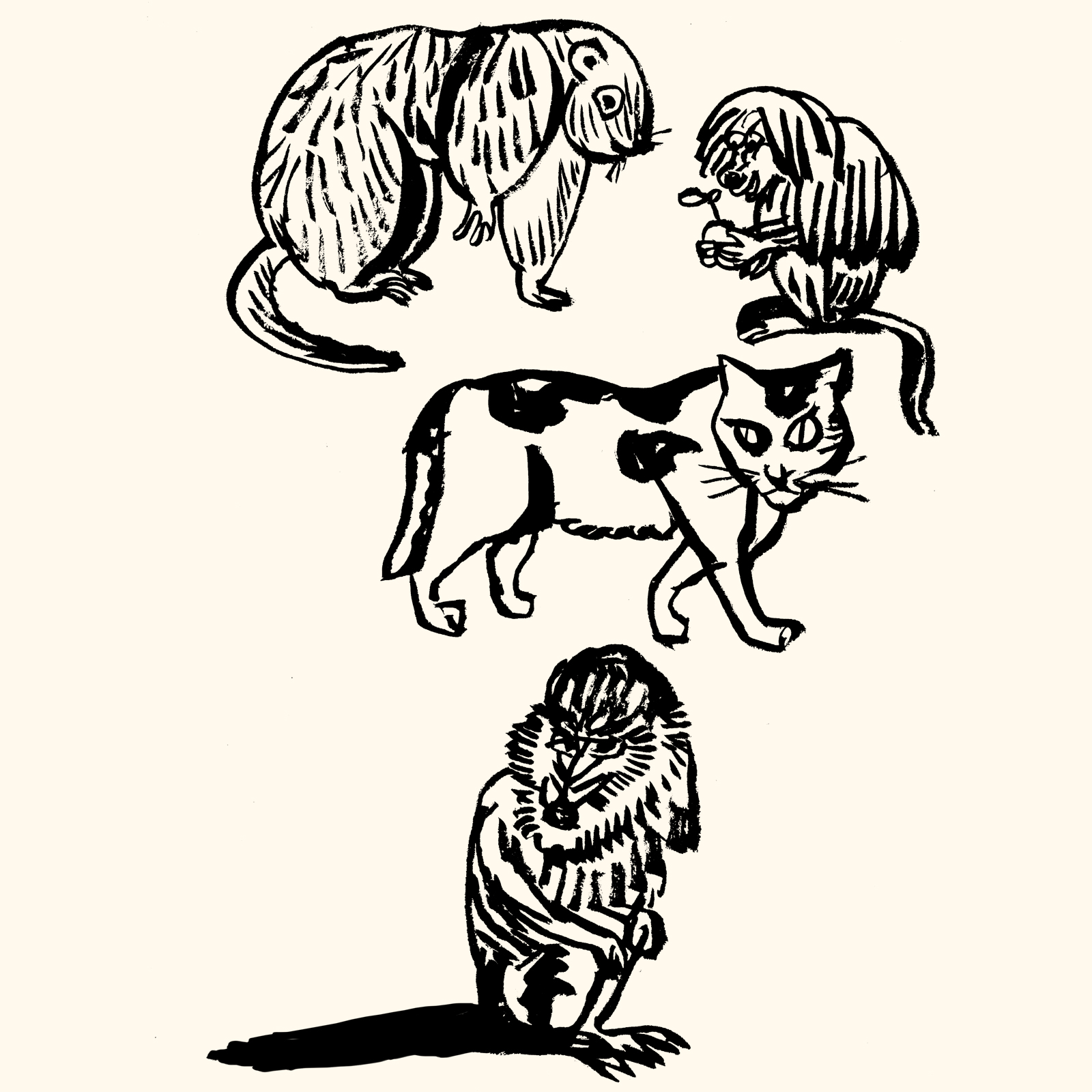 猿 リス 猫